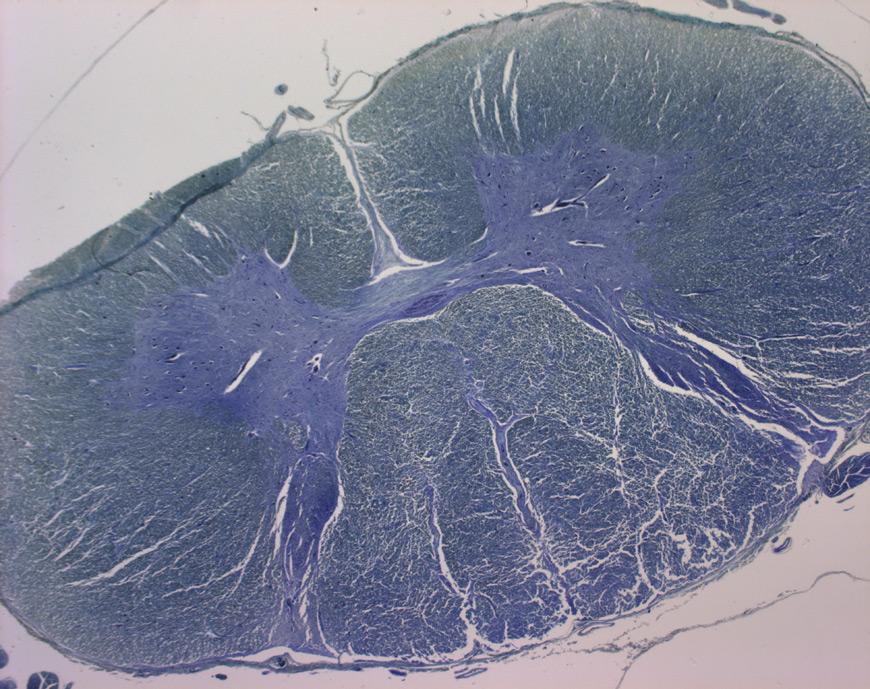 Die fremd und unheimlich schönheit der mikroskopischen fotos des