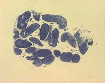 Porträts des geistes gehirnzellen unter mikroskop